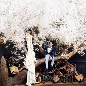 Sakura Tree - Korean Wedding