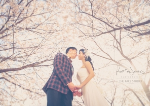 koreanpreweddingphotography_idowedding 선유도벚꽃 02